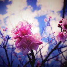 【tamagon_tama】さんのInstagramをピンしています。 《寝る前の 写真いじり遊び♪ またまた。桜ですです。  キモチも和んだところで  今日も ありがとう♪  おやすみなさい。  by  たまごん(魂言)  #桜 #桜色 #さくら  #空 #空色 #雲 #白雲 #枝葉 #和む #ありがとう #おやすみなさい》