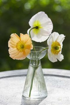 Ribbed Glass Hyacinth Forcer with poppies
