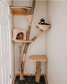 10 DIY Cat Trees and Cat Furniture | Apartment Therapy Apartment Furniture, Cat Furniture, Diy Cat Tree, Cat Trees, Tree Bookcase, Blueberry Delight, Cat Gym, Sisal Rope, Plant Shelves