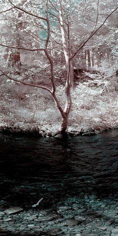Panoramic fine art color infrared landscape photo print Padden Creek, Bellingham, WA by Visionitaliane