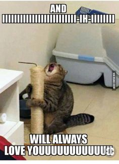 27 Animal Memes That Are Cute, Funny, and Totally Worth Looking At - World's largest collection of cat memes and other animals Memes Humor, Funny Dog Memes, Crazy Funny Memes, Really Funny Memes, Funny Relatable Memes, Funny Cats, Funny Stuff, Funny Cat Pics, Cat And Dog Memes