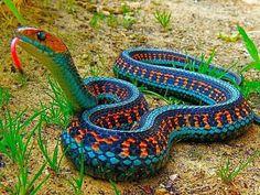 Beautiful snake!