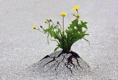 PHOTO D'ESPOIR ....la nature est plus forte que l'homme et reprend ses droits. Quand est-ce que l'homme comprendra cela ?