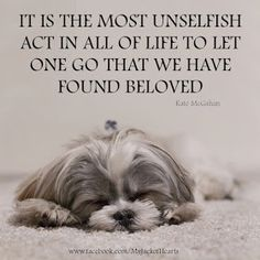 Miss my Shih Tzu Bella Love My Dog, Puppy Love, Animal Quotes, Dog Quotes, Pet Loss Quotes, Pet Loss Grief, Pet Sitter, Pet Remembrance, Dog Memorial
