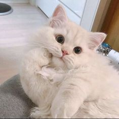 Cute Baby Cats, Cute Cats And Kittens, Cute Baby Animals, Cute Funny Animals, Kittens Cutest, Funny Cats, Fluffy Kittens, Fluffy Cat, Cats In Love