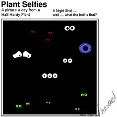 What is going on in this picture? Plant Cartoon, Night Shot, Hardy Plants, Adventure, Day, Pictures, Photos, Adventure Movies, Adventure Books
