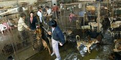 I no longer perceive China as a civilized country ...... The treatment of so many animals is BARBARIC.