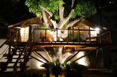 isso é que é casa na árvore!!! uhuuuu