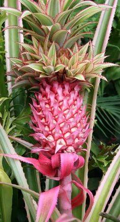 Fruit exotic