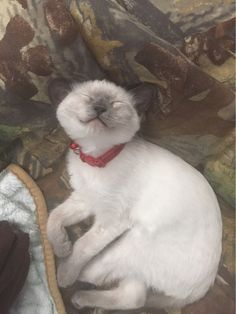 This little guy who's even smiling in his sleep. | 31 Cats Who Will Make Your Day A Little Brighter