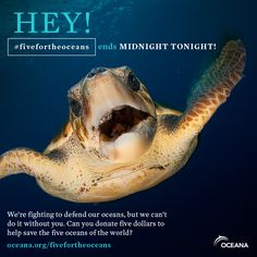 LAST CALL! #fivefortheoceans ends at MIDNIGHT tonight! Please donate before it's too late: www.oceana.org/fivefortheoceans
