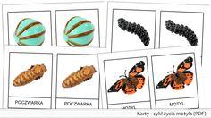 Karty - cykl życia motyla [PDF]