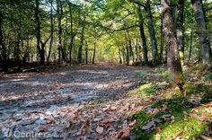 Ce parcours forestier était connu sous le nom de « chemin de Vierzon à Romorantin ». - Photo Vincent Michel