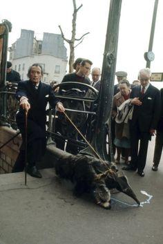 Salvador Dalí paseando con su oso hormiguero. París, 1969