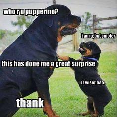 Thank doggo.