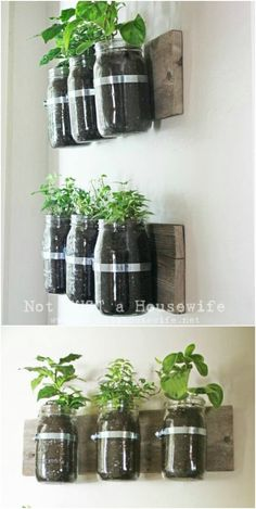 mason jar tips are readily available on our site. look at th s and you will not … - Mason jar Mason Jar Plants, Plants In Jars, Mason Jar Diy, Mason Jar Garden, Potted Plants, Diy Hanging Shelves, Diy Wall Shelves, Floating Shelves Diy, Diy Home Decor Projects