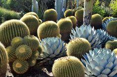 Un jardin botanique: The Huntington Botanical garden à Los Angeles http://www.vogue.fr/voyages/adresses/diaporama/guide-des-meilleures-adresses-los-angeles-restaurant-htel-bar/25318#un-jardin-botanique-the-huntington-botanical-garden-los-angeles