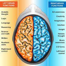 Image result for left brain right brain
