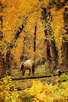 A horse grazing in the peaceful, melancholy quiet of an autumn day. Something I've seen in life, and appreciated :)