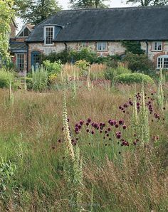 (book by Piet Oudolf) - I love the idea of having some wild spaces around the farm