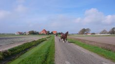 Horses from a horse pension near Callandsoog, Holland