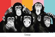 Empire 499189 - Póster de chimpancés, 91,5 x 61 cm: Amazon.es: Hogar