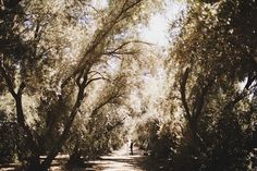 Cute angle, trees, light, etc.
