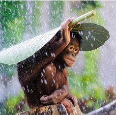 Don't buy products with Palm Oil research how it is sourced first.