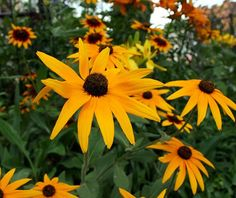 5 Flowering Garden Plants That Scoffed at the Drought