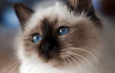 Resultado de imagem para pinterest luvas para gato