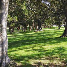 Sydney - Centennial Parklands -