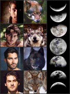 Teen Wolf: Phases Of The Moon