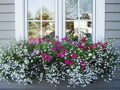 & white Lobelia are a great combination in this window box. Calabrachoa & white Lobelia are a great combination in this window box. Calabrachoa & white Lobelia are a great combination in this window box. Container Flowers, Container Plants, Container Gardening, Succulent Containers, Front Porch Railings, Chlorophytum, Window Box Flowers, Balcony Flowers, Window Planter Boxes