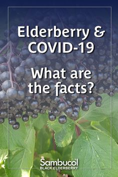 Elderberry and What Are The Facts? The association with elderberry and cytokine storm is implausible; elderberry is not likely to be able to cause cytokine storm whether used for prevention or infection, or during infection. Elderberry Benefits, Sambucol Black Elderberry, Acute Respiratory Distress Syndrome, All We Know, Medical Advice, Physiology, Herbal Medicine, Immune System, How To Stay Healthy