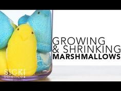 Growing and Shrinking Marshmallows #135