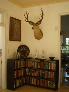 A charming nook at Hemingway's La Finca Vigia in Cuba. Is that a Picasso next to that noble stag?!