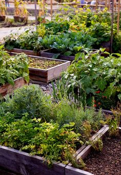 Garden Inspiration: North Brooklyn Farms is a pop-up oasis of kale, tomatoes, and eggplants growing in a former parking lot near the Williamsburg Bridge in the shadow of a defunct Domino Sugar factory. Built on pallets, the raised beds can be lifted and moved to a new location if the property owners develop the 8,000-square-foot lot.   Gardenista
