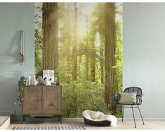 The Komar Redwood Wall Mural features the photographic image of redwood trees in a lush forest. The soft glow of the sun casts a warm glow into the forest, creating a dreamy vibe that brings the tranquility of nature into your home. Embossed Wallpaper, Wallpaper Panels, Bedroom Color Schemes, Bedroom Colors, Deco Studio, Parks, Landscape Walls, Modern Wall Decor, Home Decor Inspiration