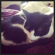 Misty Cat   Pawshake Kingswood