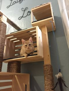 Modern Cat Condo by MileHighCarpentry on Etsy - Katze - Cats Cat Tree House, Cat House Diy, Cat Climber, Diy Cat Tree, Cat Shelves, Cat Playground, Cat Enclosure, Cat Room, Cat Condo
