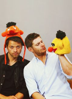 Misha Collins and Jensen Ackles... Didn't dean once say Bert and Ernie are gay.
