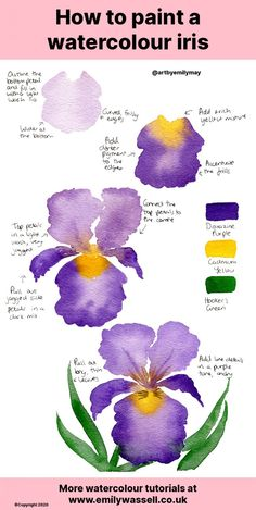 Tutorial: How to Paint a Watercolour Iris Flower - Emily Wassell Watercolor Beginner, Watercolor Art Lessons, Watercolor Paintings For Beginners, Watercolor Techniques, Watercolor Projects, Watercolor Flowers Tutorial, Watercolour Tutorials, Floral Watercolor, Iris Painting