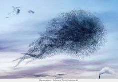 A murmuration of starlings.  The link has many more pics of surprising patterns created by flocks of birds and a cool video.