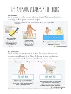 Aperçu du fichier Le pôle Nord.pdf Fun Facts About Animals, Animal Facts, Rare Albino Animals, Penguins And Polar Bears, Animals Information, African Grey Parrot, Post Animal, Can Dogs Eat Strawberries, Pet Day