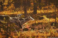 Pic: Samu-Erkki Aaramaa Finland