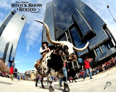 A unique shot from the All-Western Parade yesterday. Over 2,200 four-legged animals paraded through Sundance Square in Downtown Fort Worth. Quite a turnout!!