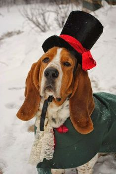 This is a custom dog costume made for your dog in whatever colors you like. I made and designed the example for my Basset Hound, Wellington. Basset Hound, Hound Dog, Christmas Animals, Christmas Dog, Christmas Carol, Tartan Christmas, Christmas Pageant, Victorian Christmas, Handmade Christmas