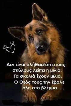 Γλυκούλη Dog Quotes, Animal Quotes, Words Quotes, Sayings, German Shepherd Memes, Shepherd Dogs, German Shepherds, Animals And Pets, Cute Animals