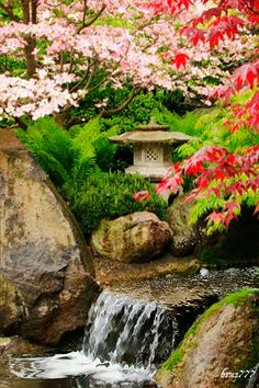 Cherry blossom and waterfall in Japanese garden