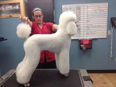 Standard Poodle Top Ten Groomer on Groom Team USA.us The UpScale Tail, dog and pet groomers